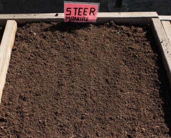 steer-manure