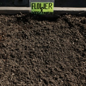 Flower-Vegetable-Mix-