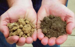 soil-test-for-spring-garden