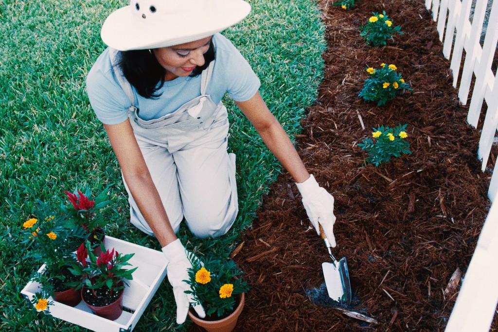 how-to-garden-basics